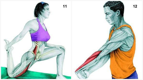 estiramientos musculares cadera antebrazo