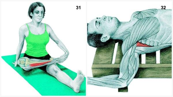 estiramientos musculares espina hombro