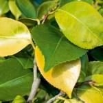 Signos de deficiencia de nitrógeno en las plantas y cómo solventarlo