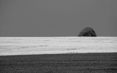 paysage en gris