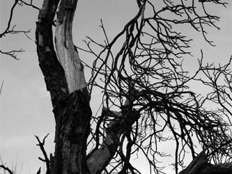 les arbres..