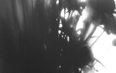 Fleurs d'ombres