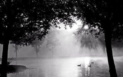 Les canards matinaux