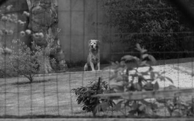 Le chien des voisins