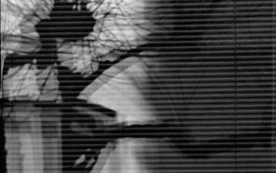 Platane fantôme sur fenêtre à persiennes
