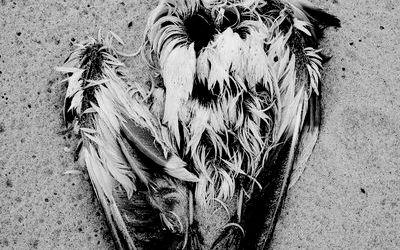 Nature morte Les Glénan