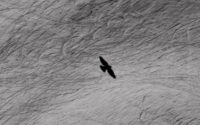 vol au dessus d'un lit de glacier