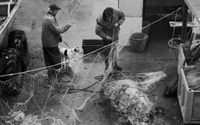 Leçon de tricot pour chien de pêche …