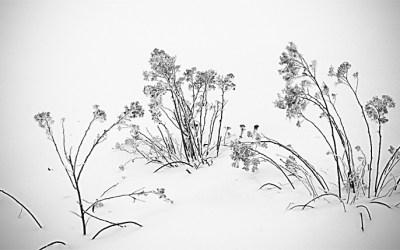 Nuit de neige – Renaissance