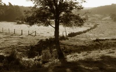 Petit matin dans le Cantal