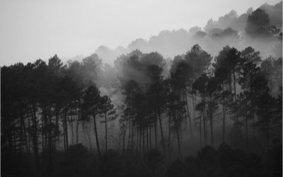 Les petits arbres d'en face #5