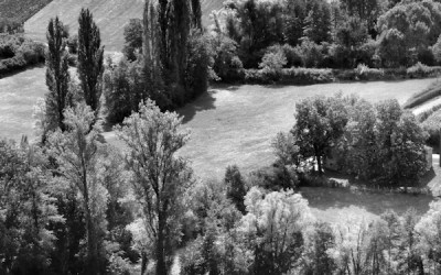 Les petits arbres d'en face #6