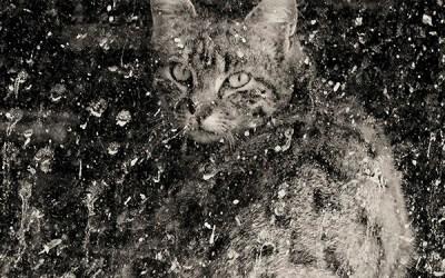 Le chat des Jacquets v2
