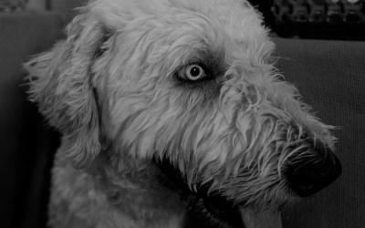 Du chien