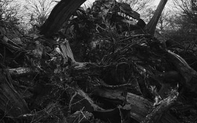 Godzilla's woods