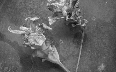 Fleur séchée (1)