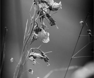 Crépuscule de fleur