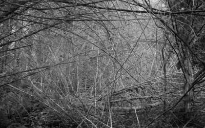 Forêt bretonne impénétrable