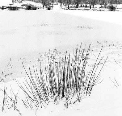 Lac de Remoray gelé 2/5