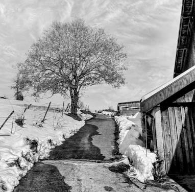 Le dégel