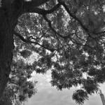 Coup d'oeil sur le ciel du quartier