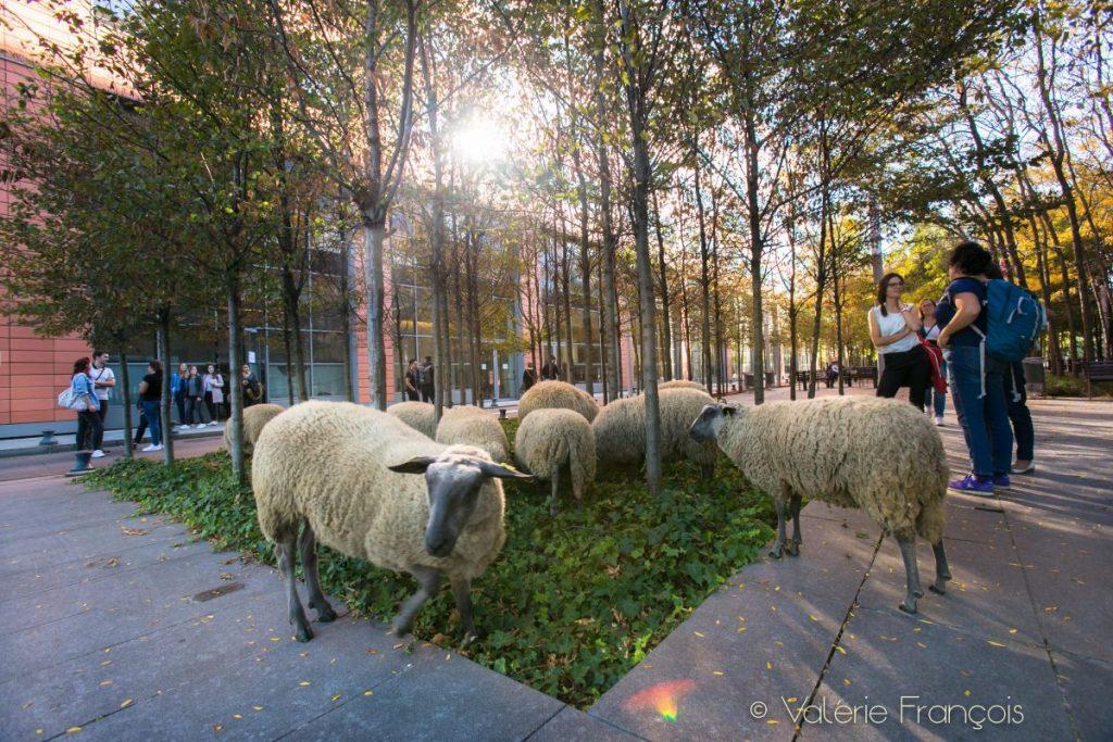 """""""Nous sommes dans un quartier où il y a beaucoup d'entreprises. Les salariés sont contents de voir les moutons au pied de leur immeuble plutôt que dans des parcs d'éco-pâturages où ils n'iront pas les voir. C'est tellement évocateur et incongru que les gens ont besoin de communiquer. On arrive à casser les barrières le temps d'une rencontre sur place pour partager."""""""