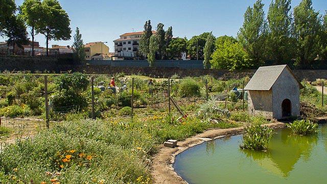 Damien deville - jardin urbain