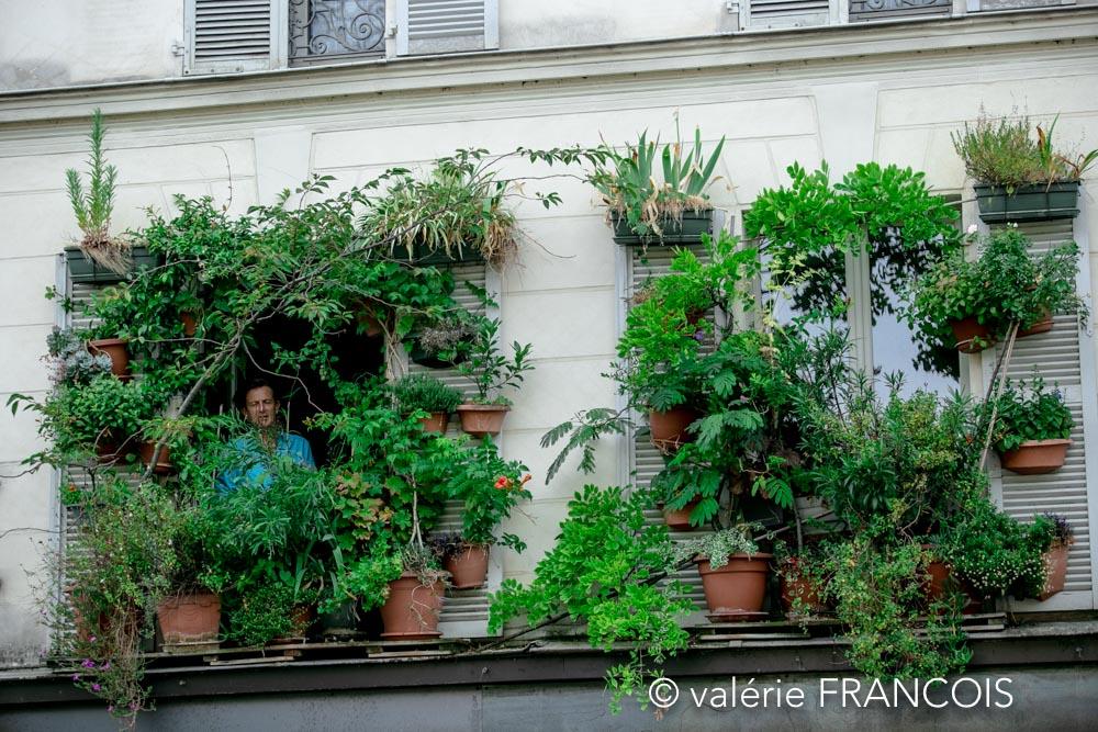 végétations Paris : J'ai gagné il y a quelques années, le prix de la plus belle fenêtre du Xème arrondissement. J'étais déjà très heureux mais ensuite j'ai remporté le prix de la plus belle fenêtre de Paris! J'étais fier. Non, en réalité, je n'étais pas fier, j'étais heureux!