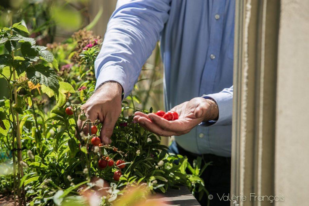 Des tomates cerises ont poussé grâce à l'aquaponie sur le balcon de Pascal Goumain