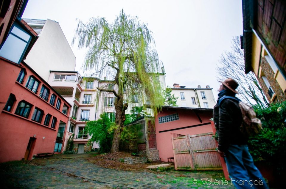 Les arbres en ville, un enjeu majeur pour le climat