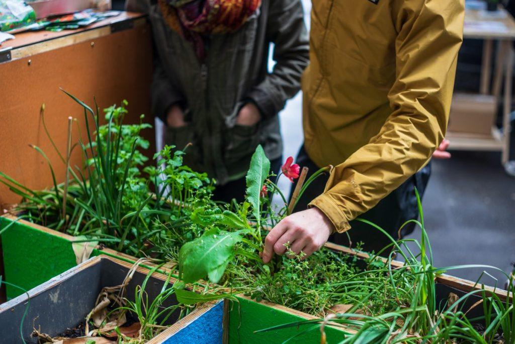 48h00 de l'agriculture urbaine 2019 à Paris - Montmartre