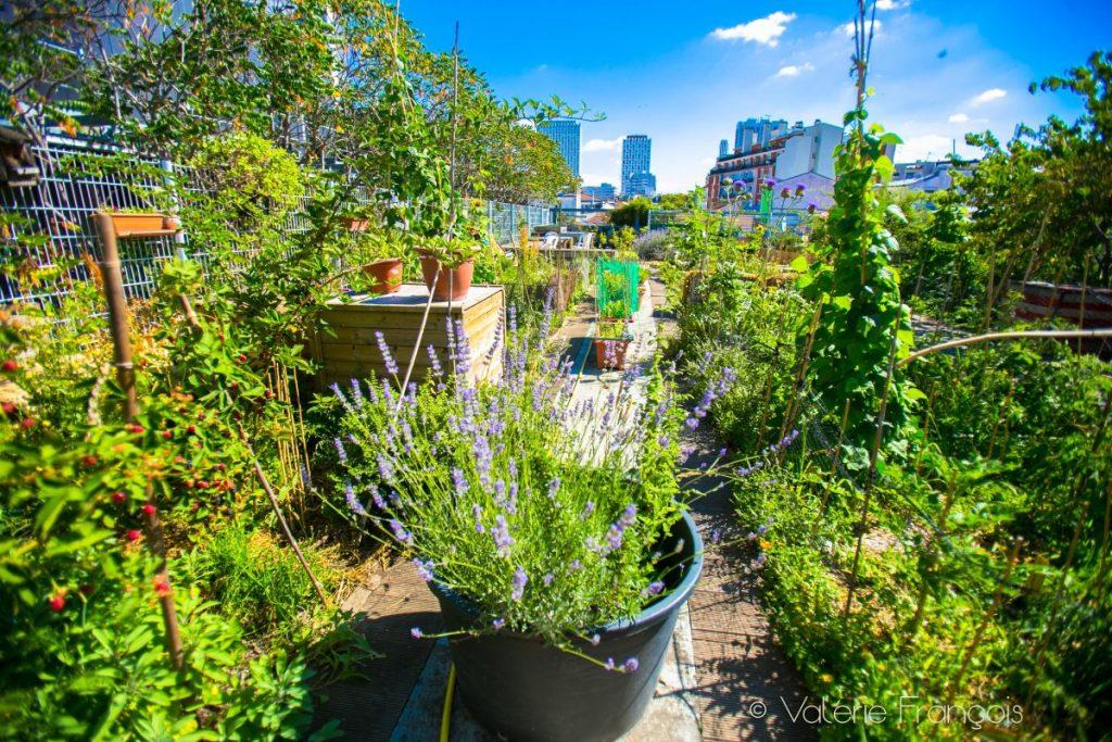Nature à Paris : le jardin sur le toit