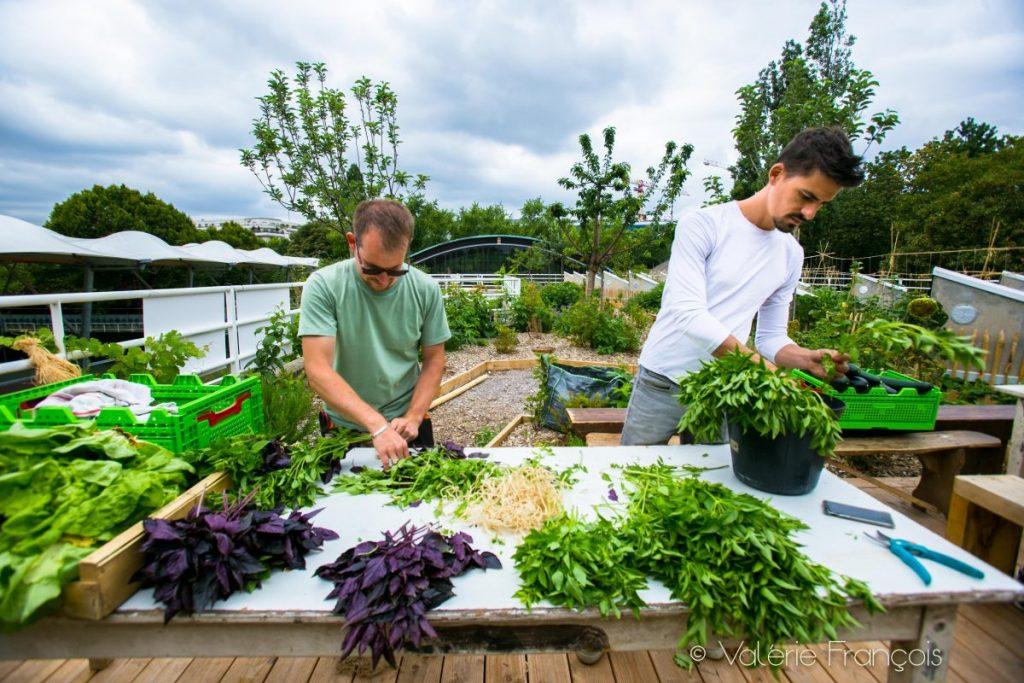 Mathieu et Cyril étalent les aromates sur la table pour réaliser des bouquets.
