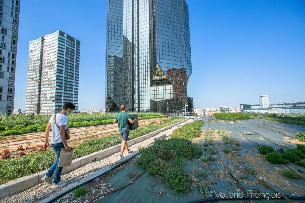 On les récolte le matin. Elles sont amenées dans le 18ème et de là, elles partent directement en vélo chez les chefs. L'agriculture urbaine et péri urbaine sont des sujets passionnants qui permettent de créer des filières courtes en ville.