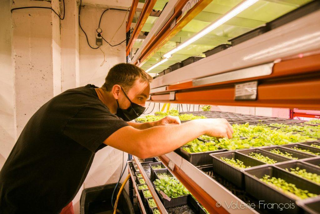 maraîchage urbain : les micro-pousses de Wesh Grow