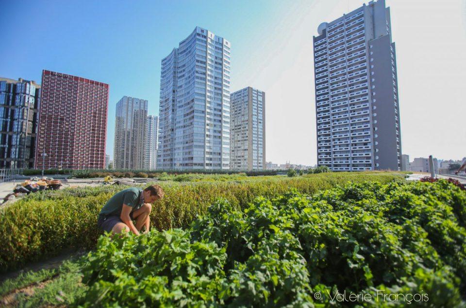 Wesh Grow : le maraîchage urbain côté cave et côté toit