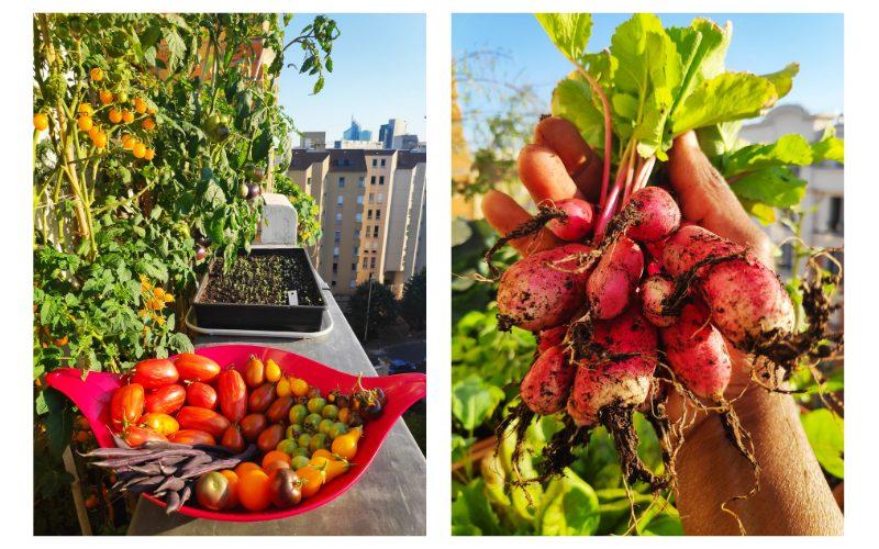 Créer un potager sur son balcon : les conseils de Valéry Tsimba