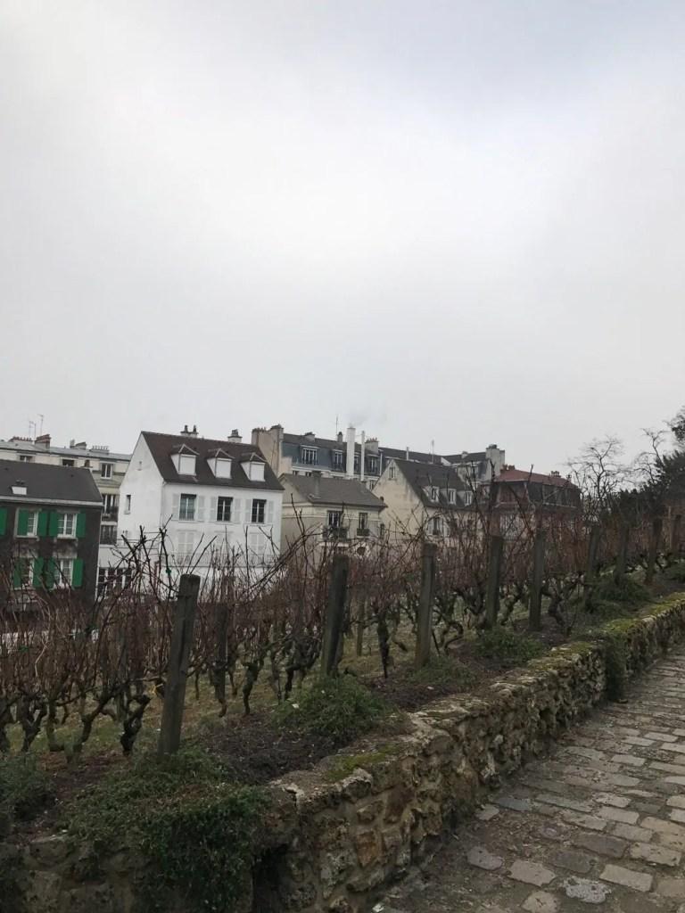 Vigne storiche nel quartiere di Montmartre di Parigi