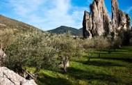 Moscato di Terracina Hum 2013 - Cantina Sant'Andrea
