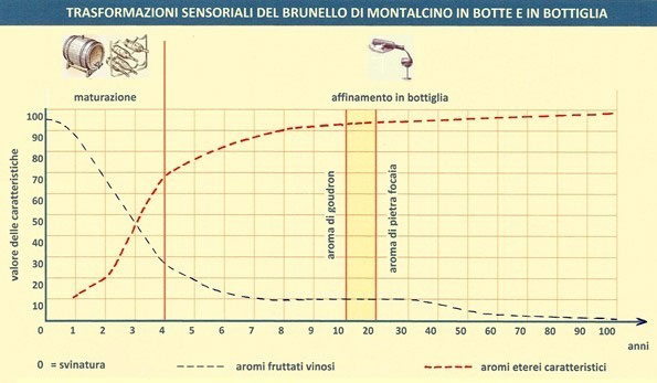 Trasformazioni sensoriali del Brunello di Montalcino in botte e in bottiglia