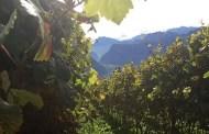 Essere all'altezza della qualità: Viaggio in Alto Adige tra altitudini e vini (e fumetti) iconici
