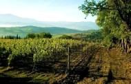 Un Brunello d'amore a Montalcino: San Polino