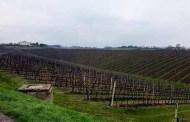 Very Slow, very Wine, il 21 e 22 Aprile a Castel San Pietro Terme è di scena l'eccellenza