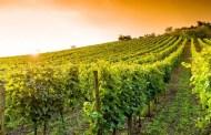 Lutti nel mondo del vino: il 2018 è un anno da dimenticare