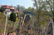 Taste Alto Piemonte 2019: 50 vini che raccontano un territorio