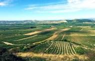 Un Rioja di gran levatura: il Graciano di Bodegas Barón de Ley
