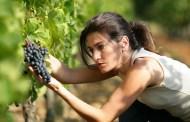 Vino, Sostantivo Femminile: il 1° marzo a Stresa un evento in