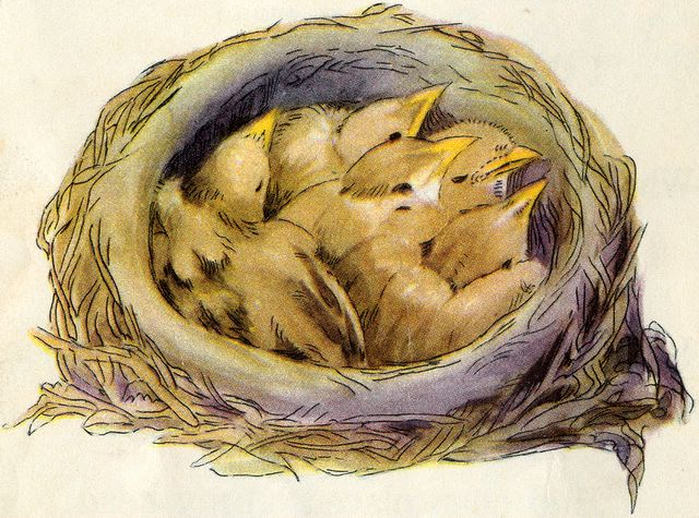Birds' Nest in its Branches Matthew 13:32
