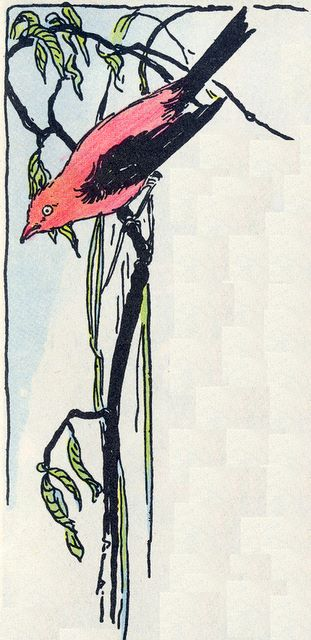 Red bird with black wings on a branch - border image