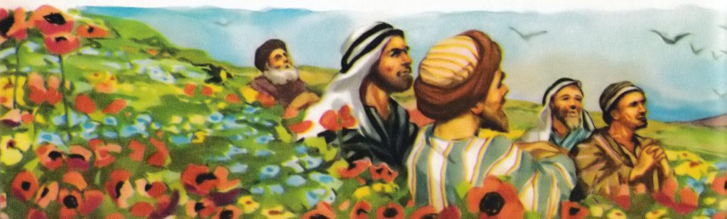 Consider the lilies (Luke 12:27)